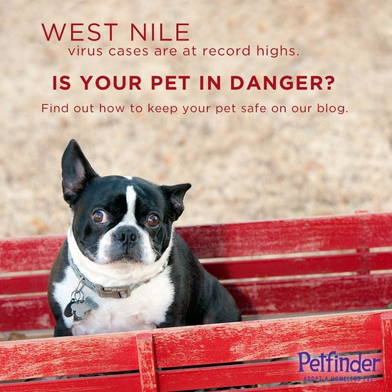 Click through to find out how to keep your #dog, #cat or #horse safe from #WestNile virus.