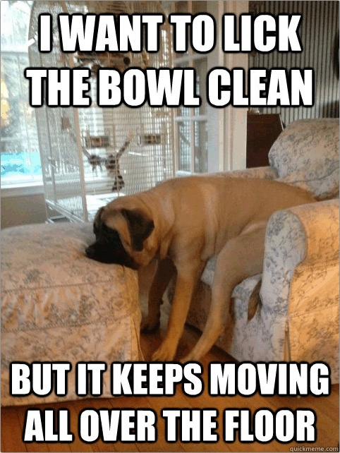 Some first world dog problems