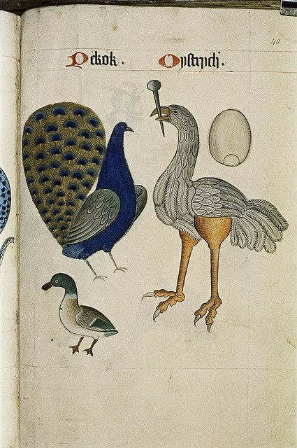 Peacock and Ostrich with its egg above it. Duck. by peacay, via Flickr