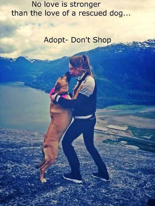 5 Reasons Why You Should Always Adopt (and Not Buy) a Pet www.onegreenplane...