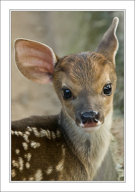 New born deer