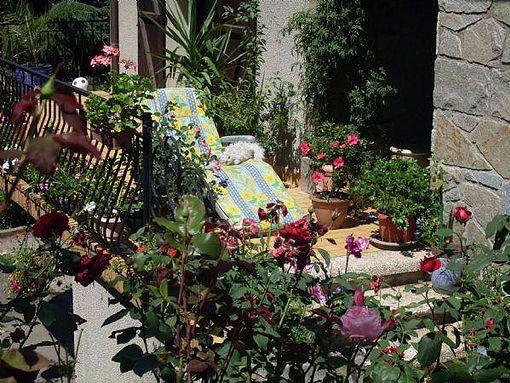 plantes-sur-balcon