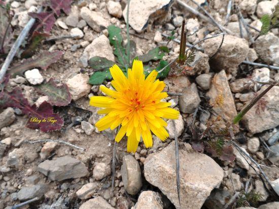 Une fleur jaune.