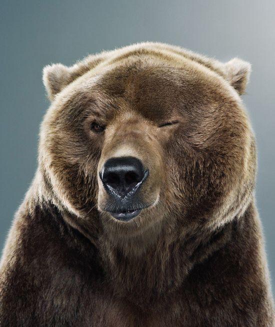~~ Bear Portrait by Jill Greenberg ~~