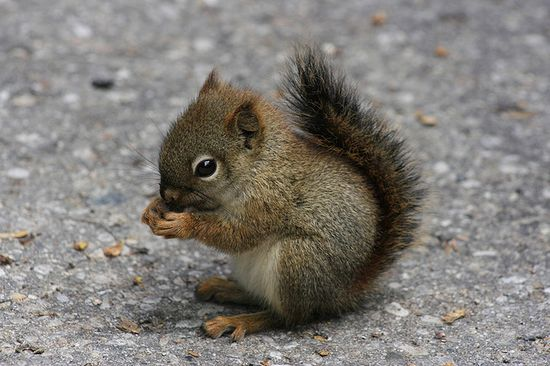 the cutest baby squirrel