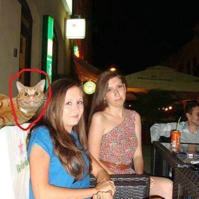 Funny cat photo Bomb