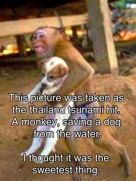 Animals are seriously amazing
