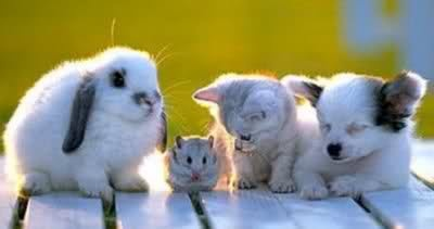 Who let him in? cute fuzzy baby animals
