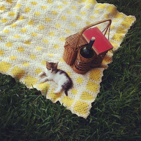 Kitten on a picnic.