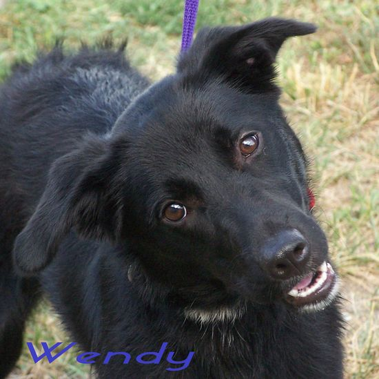 Wendy is a 1 year old female black Lab mix that was roaming the streets and found herself all alone. She was rescued by Animal Control and Rescue. She is very vibrant with big brown eyes and has high hopes for that forever home. Wendy needs a gentle...