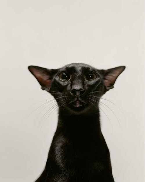 Black Cat - Want...