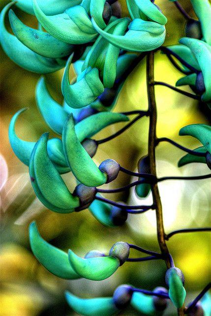 Jade vine  // Great Gardens & Ideas //