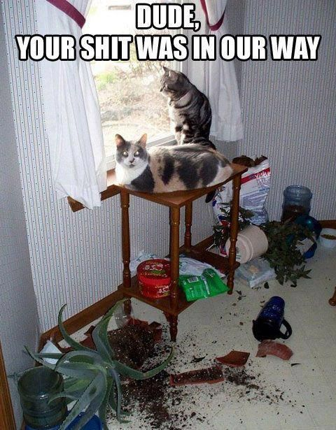 My cats would do this