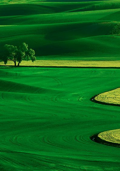 Jamaican Landscapes in America: Lush Palouse country in eastern Washington • photo: Kevin McNeal