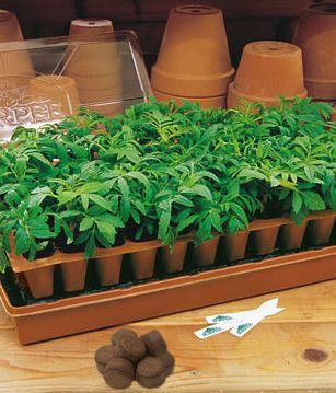 10 steps to starting vegetable seeds