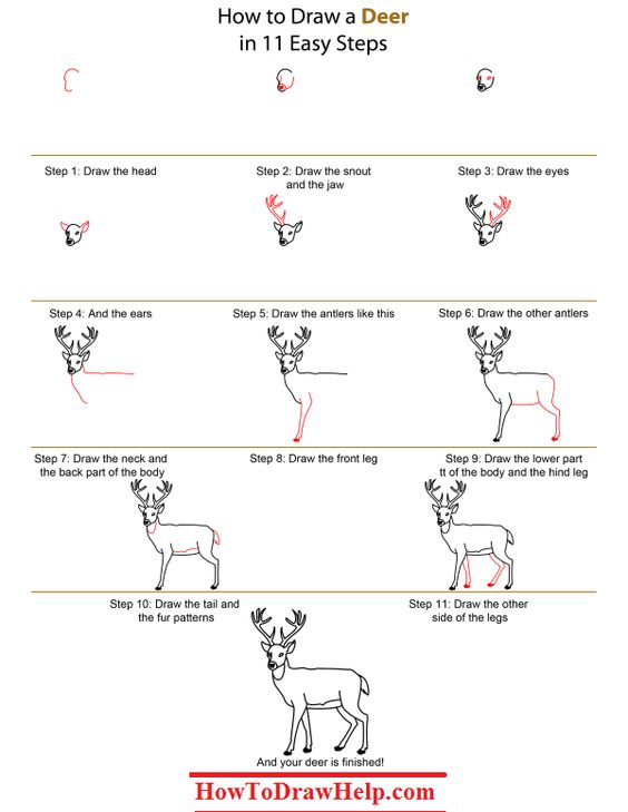 How to draw a deer step by step lots of drawing - Comment dessiner un cerf ...
