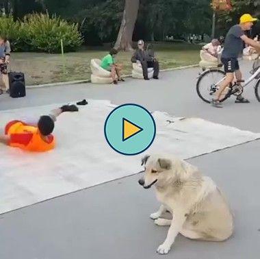 cachorro dançando com os caras