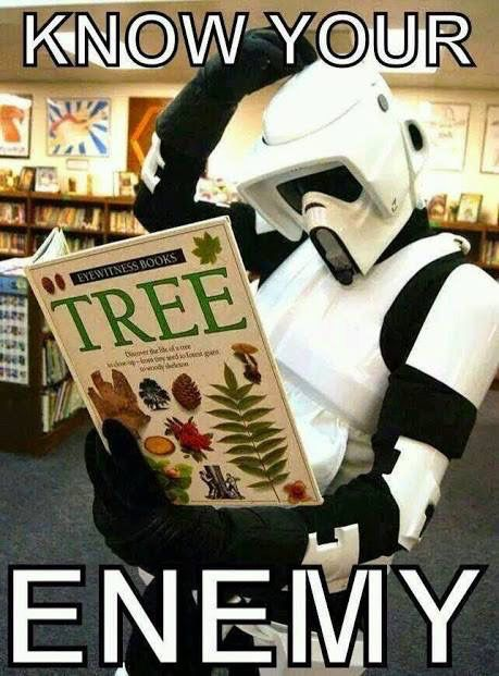 Beware of the tree.