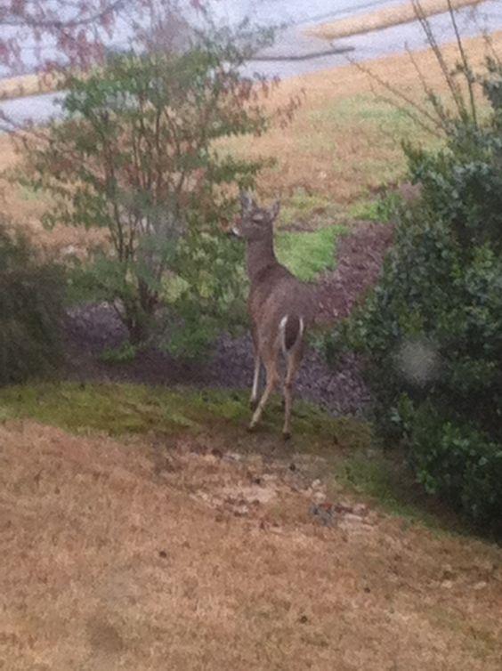 angry deer | Happy (and hopefully deer-free) gardening!