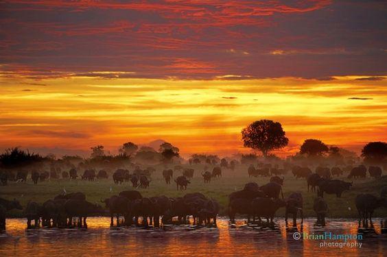 CEO Chooses Wildlife Photography and Philanthropy Over Retirement Hampton Buffalo Sunset PetaPixel 2113R1