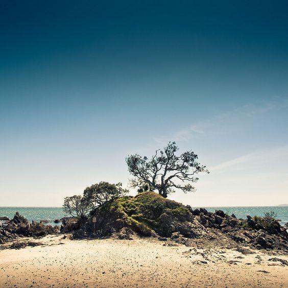 New Zealand Tree by Momento Creative, via Flickr: Photos, Zealand Tree, Zealand Beach, Travel Specialists, Trees, New Zealand