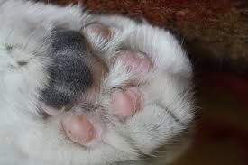 What to do with dry kitty paws