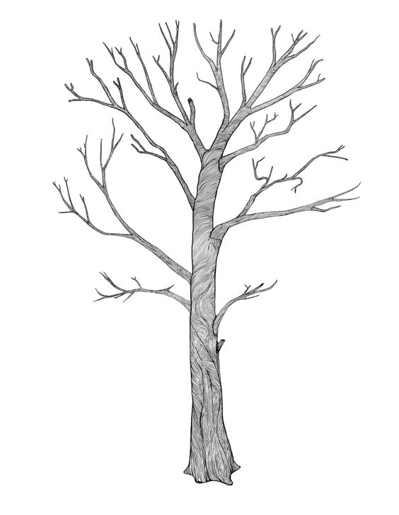 Tree drawings thin line and croquis on pinterest - Croquis arbre ...