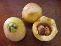 Pomarrosa.Origen: Sureste de Asia. Los frutos tienen un olor y un sabor que recuerda a los pétalos de las rosas, de donde proviene su nombre.
