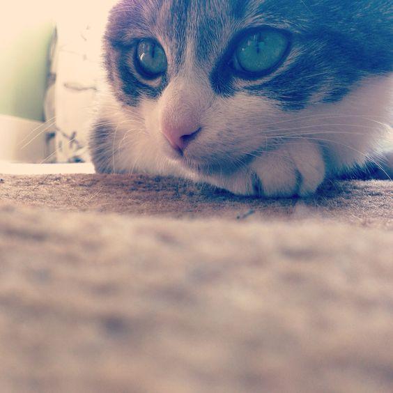 My baby girl <3 Luna