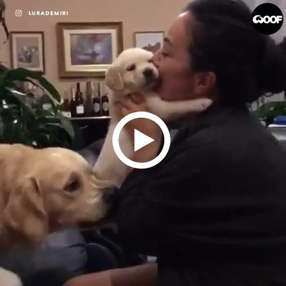 Esse cachorro está com ciúme do dono