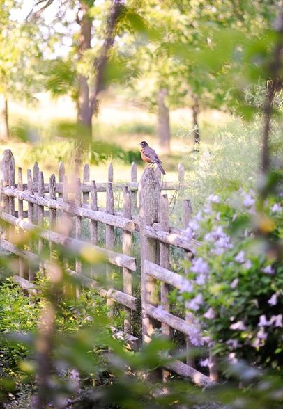Cute fence: