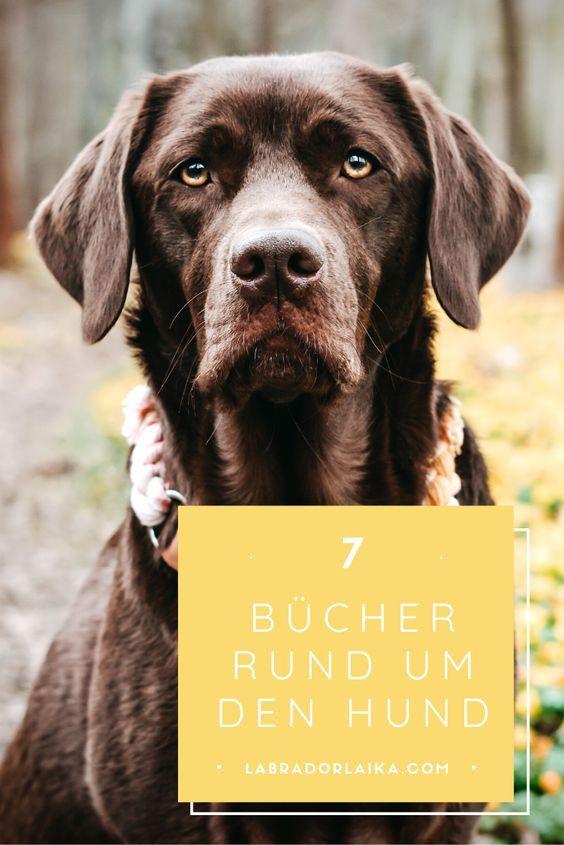 Meine Susse Ichliebemeinenhund Tier Fotos Hundegluck Goldenretrivermix Naturedog Pfotenliebe Hundeaufinsta Golden Retriever Labrador Retriever Dogs