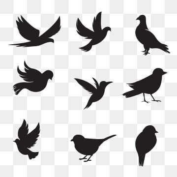 Bird Silhouette Collection Png And Vector In 2020 Flying Bird Silhouette Bird Silhouette Shadow Illustration