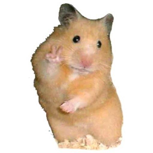 Pin De Solange Nahiara En Memes Fotos Divertidas De Animales Fotos De Perfil Whatsapp Fotos De Memes