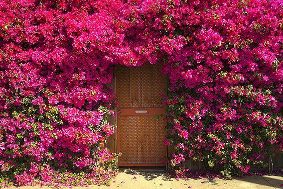 花だらけの家に囲まれたドア。