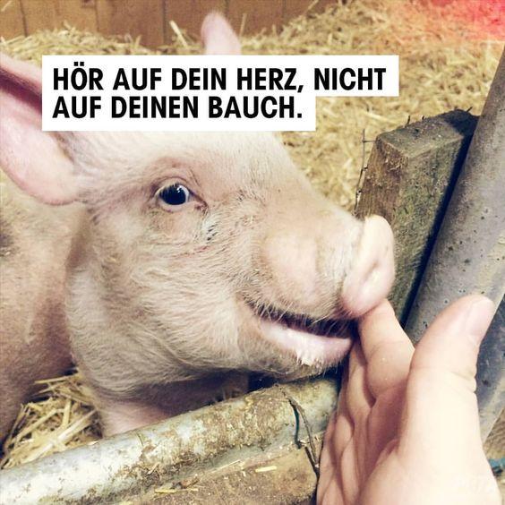 Es ist nicht schwer, auf tierische Produkte zu verzichten. Klar, aller Anfang ist schwer, aber wir machen ihn dir leichterâœŒï¸Â…