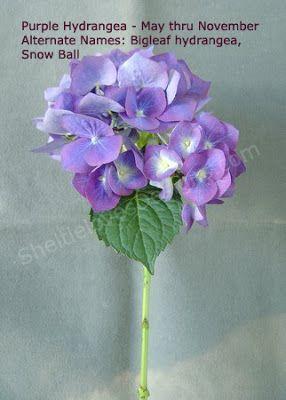 Floral Artistry: Purple Flower Types
