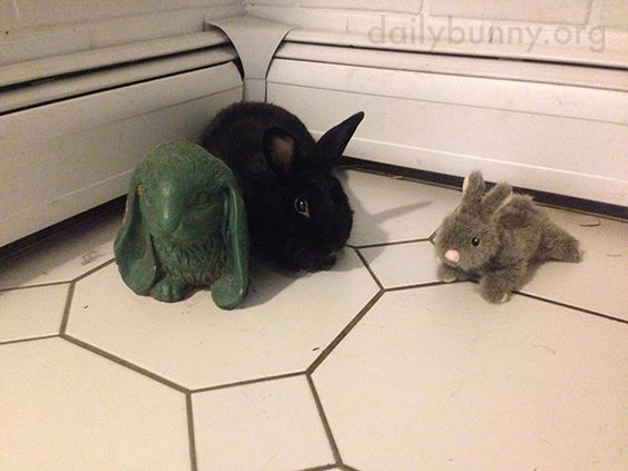 Bunny hangs out with a couple of pals - August 13, 2016