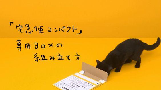 ヤマト運輸のクロネコさん、宅配便の箱を組み立てる。え?!この猫さんすごすぎw 何度撮り直したんだろう?