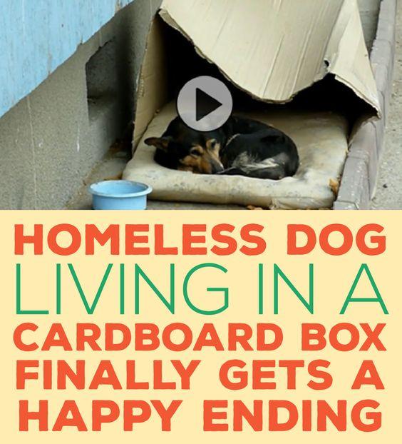 Homeless Boy Gets Bedroom For Christmas: Pinterest • The World's Catalog Of Ideas