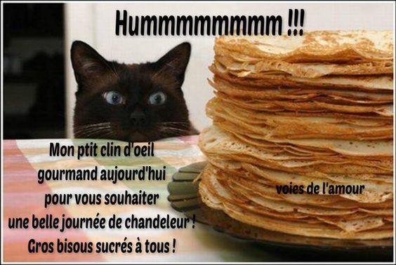 Hummmmmmmmm !!! Mon ptit clin d'oeil gourmand aujourd'hui pour vous souhaiter une belle journée de chandeleur ! Gros bisous sucrés à tous ! #chandeleur chat gourmand crepes mardi gras humour drole