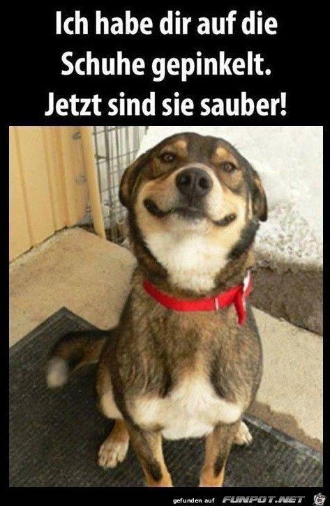 Unser Hund Katzen Lustige Spruche Hund Witze Lustige Hund Bilder