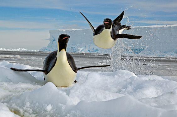 Amour, amitié, humour, fidélité... 14 faits surprenants chez les animaux - National Geographic France