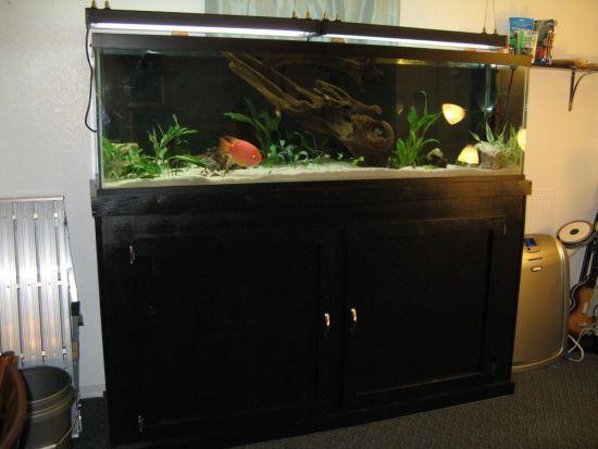 breakspirit » Blog Archive » 125 Gallon Aquarium Part1 & Pinterestu0027teki 25u0027den fazla en iyi 125 gallon aquarium fikri ... azcodes.com