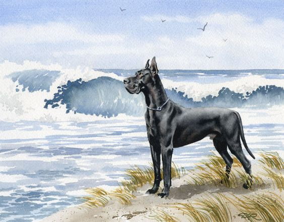 BLACK GREAT DANE At The Beach Dog Watercolor Art Print Signed by Artist D J Rogers