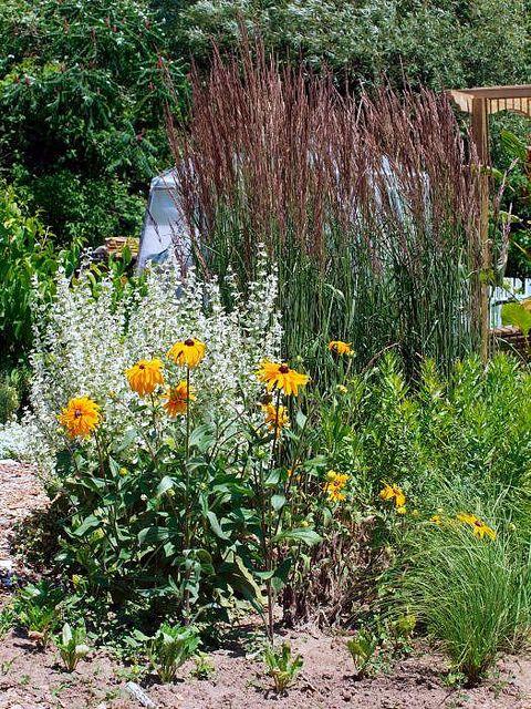 Ornamental grasses drought tolerant and grasses on pinterest for Southwest landscaping plants