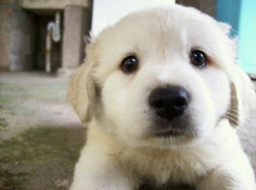 Hướng dẫn kinh nghiệm nuôi chó con 4