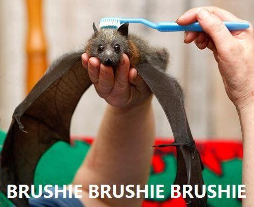Brushing the bat
