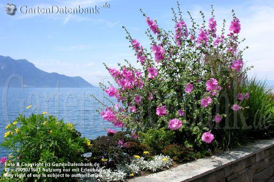 Montreux Flora Mediterrane Pflanzen Bilder (11 Fotos)