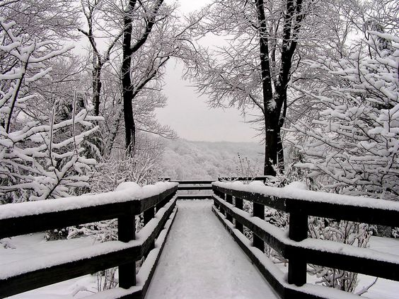 Winter Landscape Photograph 11x14 Black and White Photography - Snowfall Symmetry. $45.00, via Etsy.